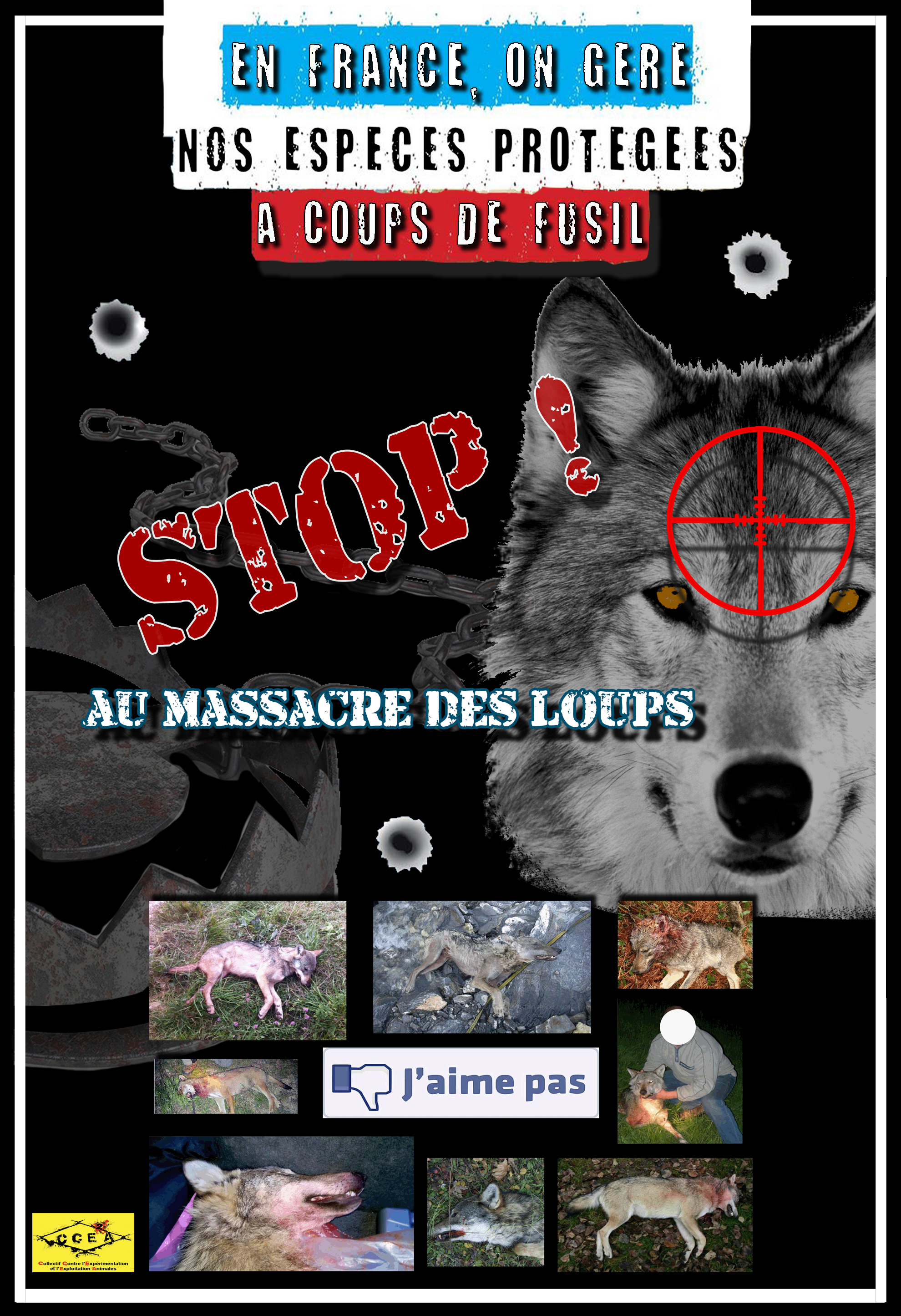 massacre loups